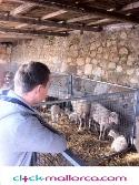 Post Thumbnail of Mercado de Sineu en Mallorca