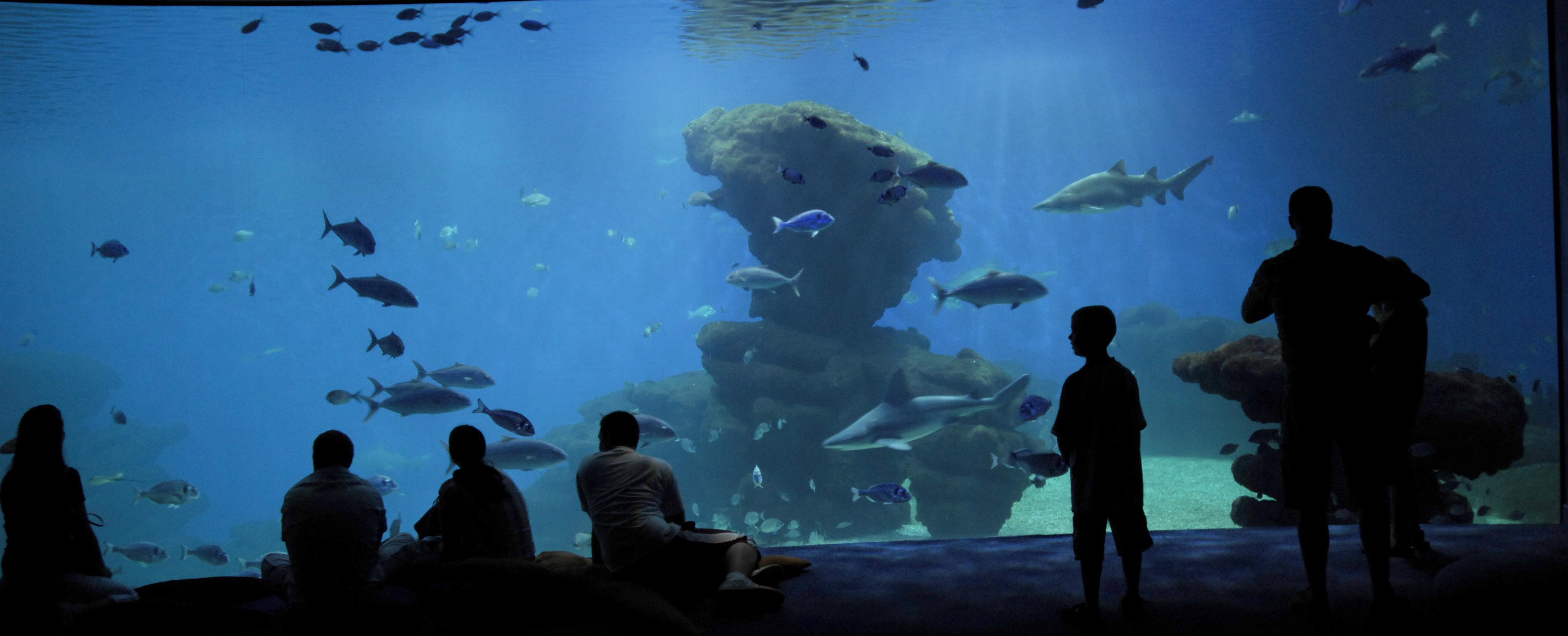 Post Thumbnail of Que visitar en Mallorca con niños? Palma Aquarium