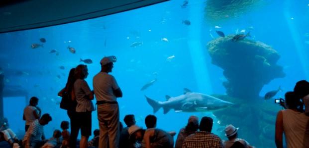 navidad en mallorca en palma aquarium