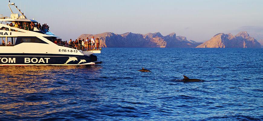 delfines en mallorca